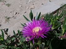 Een beeld van de bloem van zijn schoonheid in zijn vorm, die zijn aandacht oproept en slechts in vochtige plaatsen groeit stock fotografie