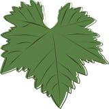 Een beeld van een donkergroen blad van druiven Royalty-vrije Stock Afbeeldingen