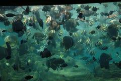 Een beeld van een aquariumhoogtepunt van vissen Stock Afbeelding