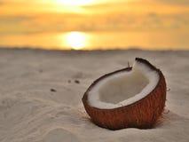Een kokosnoot die op het strand liggen Stock Foto's