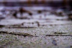Een beeld van een moeras stock afbeeldingen