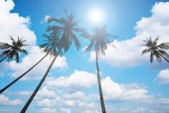 Een beeld van vier aardige palmen in de blauwe zonnige hemel Royalty-vrije Stock Foto's
