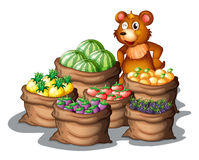 Een beer met de onlangs geoogste vruchten Stock Foto