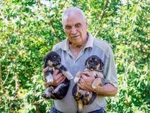 Een bejaarde houdt twee puppys op zijn handen Manifestatie van lo royalty-vrije stock afbeeldingen