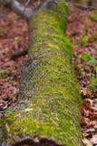 Een bemoste boomstam ter plaatse Stock Foto's