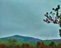 Een berg in het brandende bos stock foto's