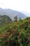 Een berglandschap in Oostenrijk Stock Foto's
