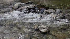 Een bergrivier met steenbodem stock video