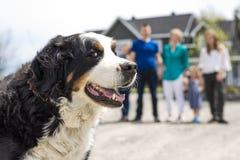 Een Bernese-Berghond met familieonduidelijk beeld op de rug stock foto