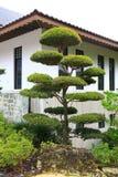 Een beroemde traditionele Japanse tuin Royalty-vrije Stock Foto