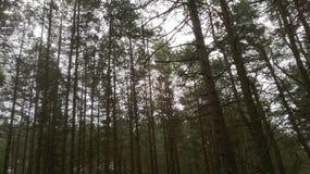 Een beschermd natuurreservaat op het Curonian-Spit Stock Fotografie