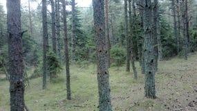 Een beschermd natuurreservaat op het Curonian-Spit Stock Foto