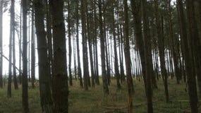 Een beschermd natuurreservaat op het Curonian-Spit Stock Foto's