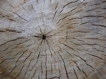 Een besnoeiing van een boom toont zijn structuur Stock Foto's