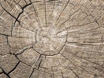 Een besnoeiing van een oude boom met barsten stock foto's
