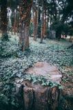 Een besnoeiingsboom royalty-vrije stock afbeelding