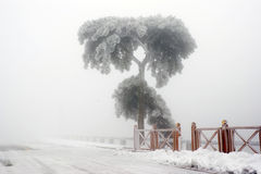 Een bevroren boom royalty-vrije stock afbeeldingen