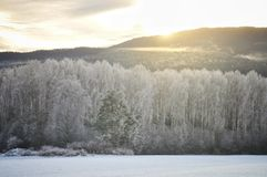 Een bevroren bos Stock Afbeeldingen
