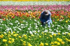Een bezige arbeider in een reusachtige flowerfield Stock Fotografie