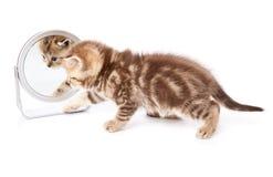 Een bezinning van een katje in de spiegel stock afbeeldingen
