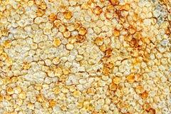 Een bijenkorf Stock Afbeelding