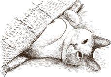 Een binnenlandse kat slaapt onder een deken Stock Foto's