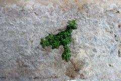 Een blad in cement in een achtergrondinstallatie Stock Afbeeldingen