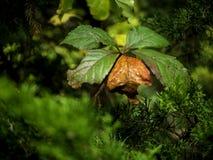 Een blad in het bosbegin om de herfstkleuren te krijgen stock foto's