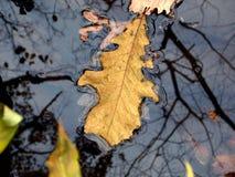Een blad op nog water royalty-vrije stock afbeeldingen