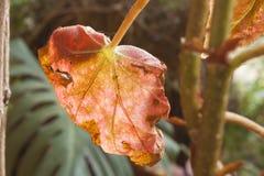 Een blad tegen licht op San Cristobal Chiapas Stock Fotografie