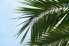 Een blad van palm dichte omhooggaand stock afbeeldingen