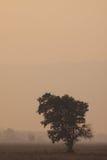 Een blauw gordijn in de ochtendmist Royalty-vrije Stock Foto's