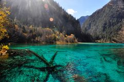 Een blauw meer en bomenfossielen in het meer Minerale substantie Royalty-vrije Stock Afbeelding