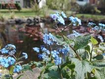 Een blauwe bloem stock fotografie