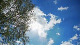 Een blauwe duidelijke de lentehemel en een boom met het tot bloei komen gaan weg stock video