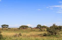 Een blauwe hemel van Serengeti Tanzania, Afrika Royalty-vrije Stock Foto
