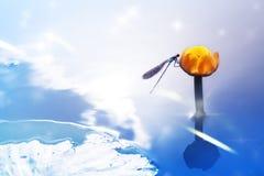 Een blauwe libel op een gele waterlelie tegen de achtergrond van een waterige oppervlakte Artistiek beeld Royalty-vrije Stock Afbeeldingen