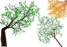 Een blik aan de bomen van de bodem Stock Afbeeldingen