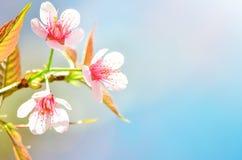 Een bloei van aard Stock Foto