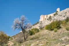 Een bloeiende amandelboom en een oud kasteel op de heuvel Stock Afbeeldingen