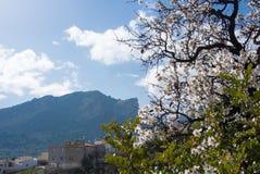 Een bloeiende amandelboom en op de heuvel en de bergen op de achtergrond Royalty-vrije Stock Afbeelding