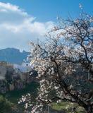 Een bloeiende amandelboom en op de heuvel en de bergen op de achtergrond Royalty-vrije Stock Foto's