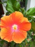 Een bloem Royalty-vrije Stock Foto