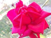 Een bloem royalty-vrije stock fotografie