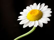 Een bloem Stock Afbeeldingen