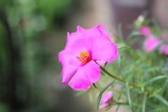 Een bloem. Stock Foto