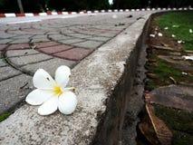 Een bloem Stock Afbeelding