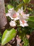 Een bloem Stock Fotografie