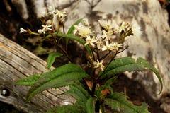 Een bloem in de bergen stock fotografie