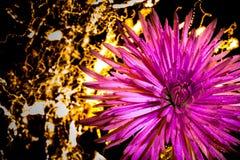 Een Bloem in de Lichten Stock Afbeeldingen